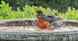 Robin In A Bird Bath DSCN25263-4