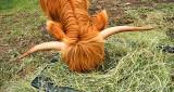 The Hay Is Better On The Bottom DSCN26666