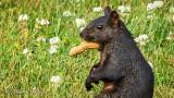 Squirrel With Peanut DSCN26965
