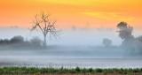 Ground Fog At Sunrise P1310839-41