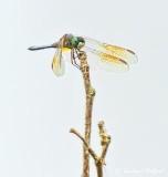 Dragonfly DSCN27987