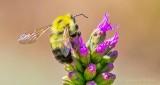 Bee About To Take Flight DSCN28208