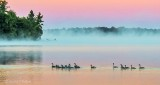 Geese On Misty Otter Lake At Sunrise DSCN28273-5