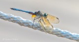 Dragonfly On A Rope DSCN28181