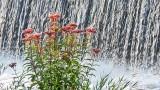 Wildflowers Near Falling Water DSCN29109