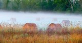 Bales In Ground Fog P1320758-60