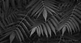 Leaves DSCN30217