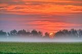Sunrise Over A Misty Cornfield P1330040-6