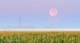 Moon Setting Over Misty Cornfield P1330016-8