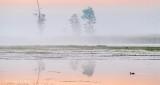 Three Trees In Sunrise Fog P1330484