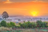 Ground Fog Beyond Horse At Sunrise P1330604-10