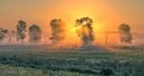 Trees In Misty Sunrise P1340017-23