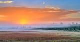 Sunrise Patchy Ground Fog P1330586-8