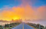 Foggy Roses Bridge Sunrise P1340477-83