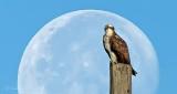 Moon & Osprey DSCN32259