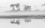 Ground Fog DSCN31853BW