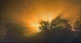 Trees In Misty Sunrise P1340517
