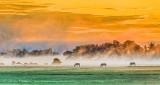Three Horses In Misty Sunrise P1340461-3