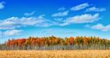 Autumn Landscape DSCN32525-7