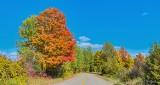 Autumn Backroad DSCN32486-8