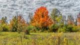 Autumn Tree DSCN32582-4