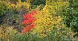 Autumn Trees P1000004-6