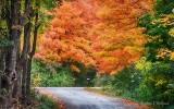 Autumn Backroad P1000238-40