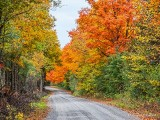 Autumn Backroad P1000232-4