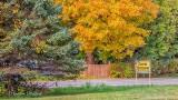 Autumnscape P1000343-5