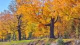 Autumnscape P1000562-4