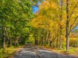 Autumn Backroad P1000601-3