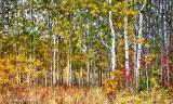 Autumnscape P1000970-2