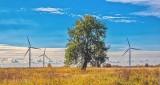 Wind Turbines & Lone Tree P1010127-9
