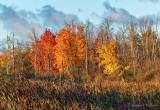 Autumnscape P1010373
