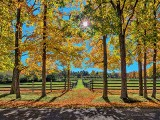 Autumn Horse Fences P1010478-80