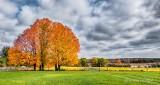 Autumnscape P1010877-9