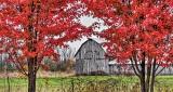 Autumn Barn P1020070-2