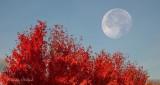 Autumn Moon P1020218