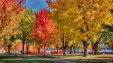Autumn Hardy Park P1020256-8