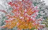 Fall Snowfall P1020434-6