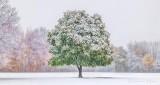 Fall Snowfall P1020446-8