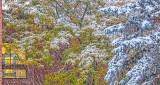 Fall Snowfall P1020440-2