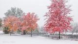 Fall Snowfall P1020515-7