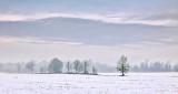 Autumn Snow P1020569