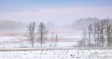 Autumn Snow P1020566