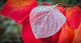 Wet Autumn Leaf Underside P1020622-4