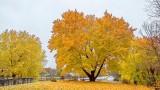 Autumnscape P1200516