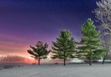 Three Pines On A Foggy Night P1350380-6