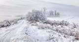 Frosty Landscape P1030500-2