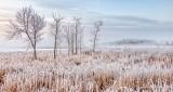 Frosty Landscape P1030539-44